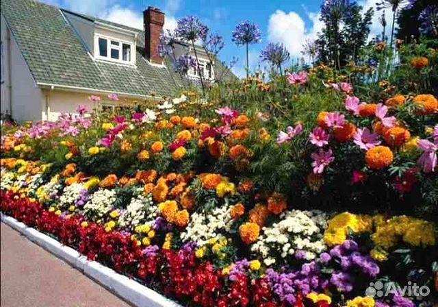 многолетние цветы в картинках: