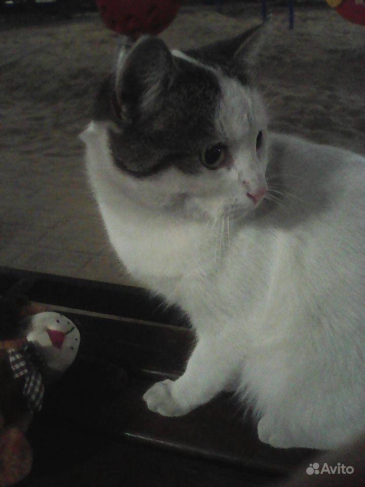Кот в добрые руки - фотография № 2