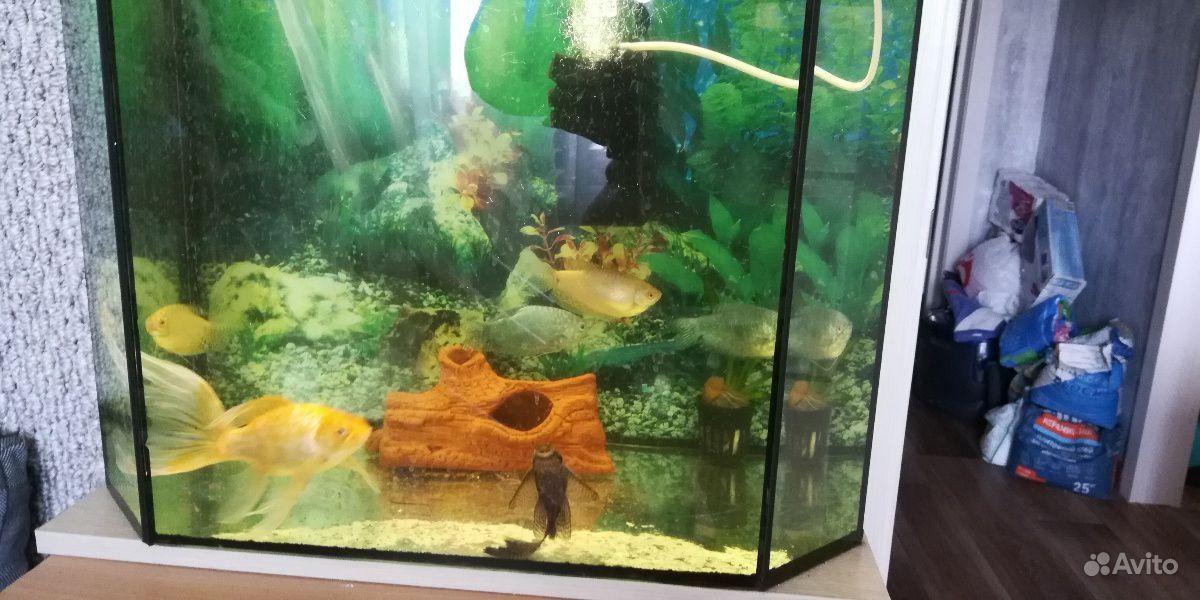 Рыбки большие купить на Зозу.ру - фотография № 3