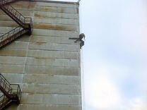 Альпинисты, Любые Фасадные работы, Высотники — Предложение услуг в Санкт-Петербурге
