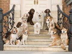 Частные объявления ветеринар на дом спб дать бесплатное объявление в одинцовско