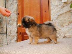 Подать объявление о продаже собаки спб авито подать бесплатно объявление продажа дома