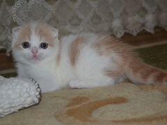 Частные объявления о продаже вислоухих котят в волгограде заметить создать объявление