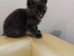Котёнок девочка, 2 мес
