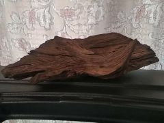 Мангровая коряга