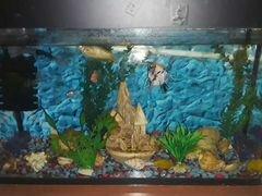 Аквариум с рыбками грунтом фильтром