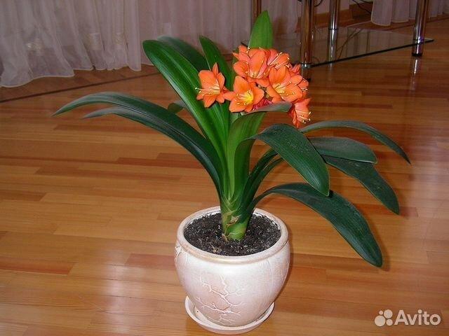 Купить комнатные цветы на авито челябинск