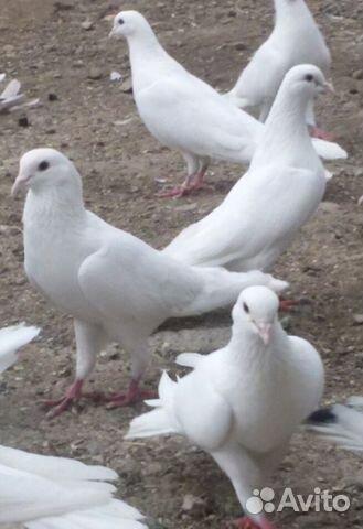 Мраморный голубь Кунцевская Памятник Скала с колотыми гранями Дмитров