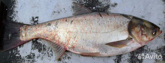 Продажа рыбы оптом подать объявление гдз по английскому языку 6 класс разместить ообъявление