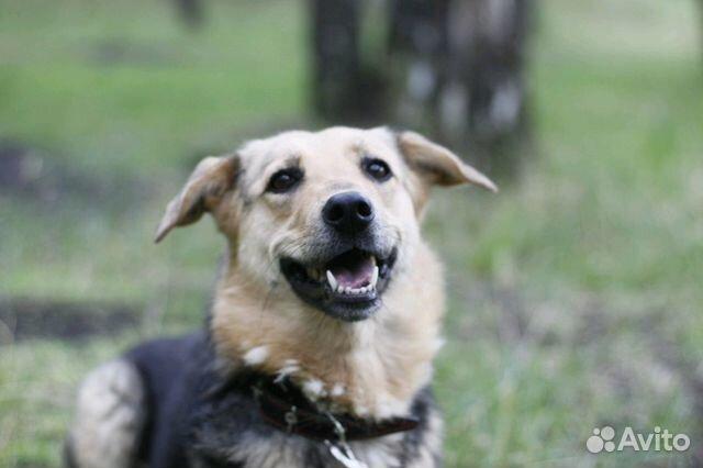 Улыбчивая собака Шелли в добрые руки купить на Зозу.ру - фотография № 6