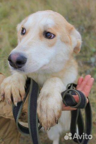 Чудесная собака подросток в дар купить на Зозу.ру - фотография № 6