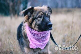 Пушистая собака в дар купить на Зозу.ру - фотография № 5