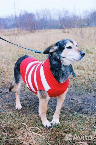 Собака ниже колена в дар купить на Зозу.ру - фотография № 3