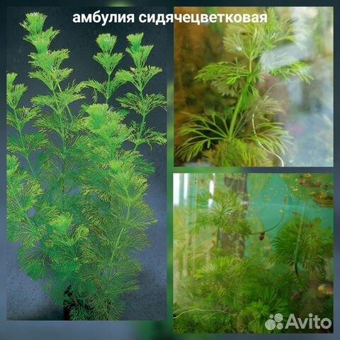Аквариумные растения - 9 шт  89519173738 купить 4