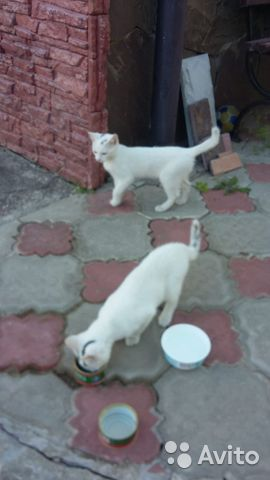 Отдам котят в добрые руки  89201884566 купить 1