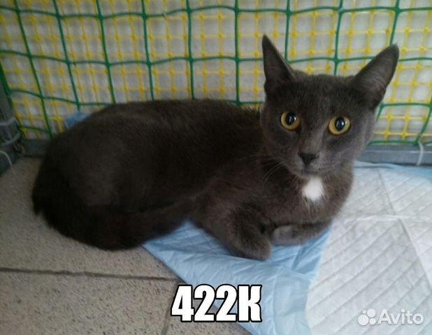 Кошка дымчатая 1 год  89617400741 купить 1