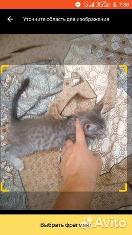 Потерялся котенок  89992238251 купить 1