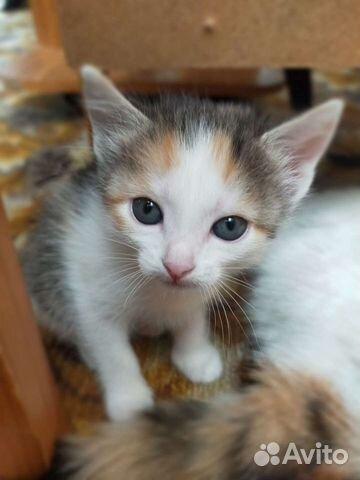 Kitty  89642177980 buy 1