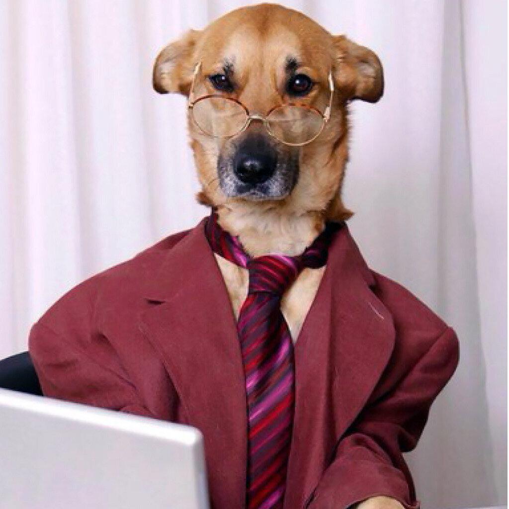Девочка, прикольные картинки животные на работе