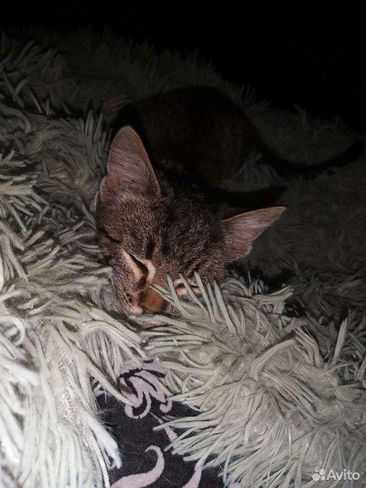 Отдам серого котенка в добрые руки  89502787846 купить 3