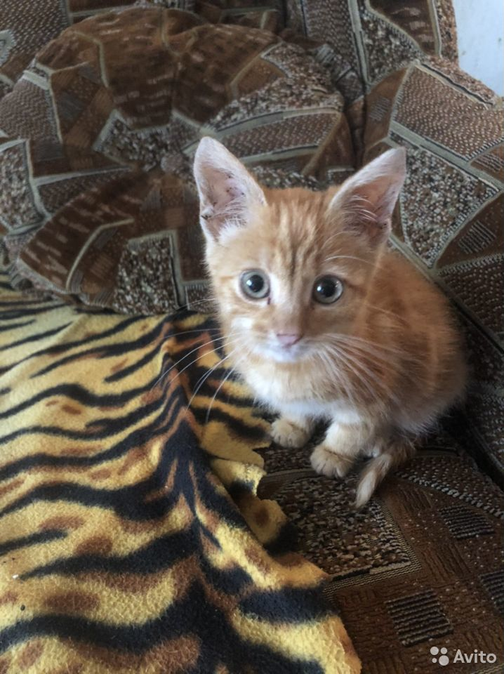 Отдам котенка требуется ветеринарная помощь