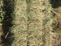 Продам сено — Животные в Великовечном