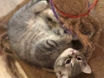 Предлагается котик