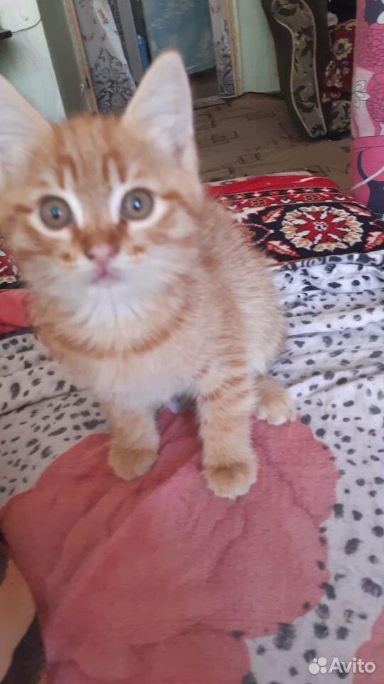 Кошки  89888508420 купить 4