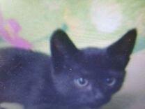 Котенок черный