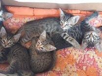 Воспитанные котята в дар
