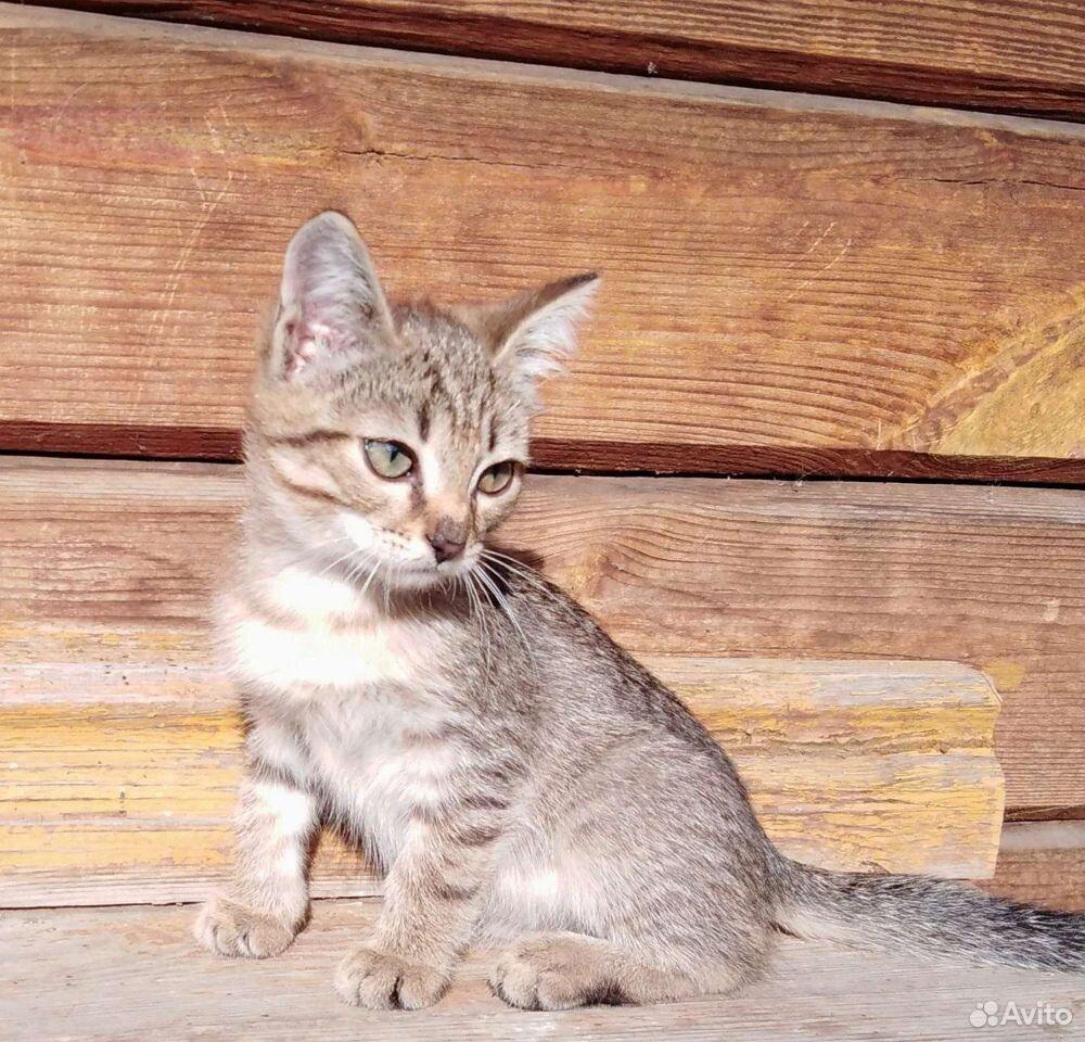 Котята  89125773660 купить 6