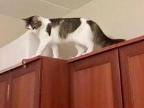Мушка ищет дом
