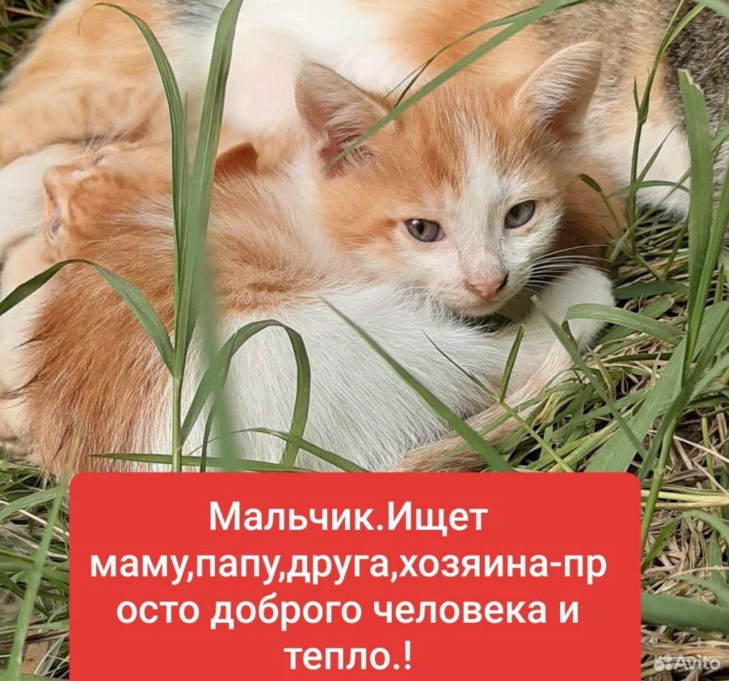 Котенку 1 месяц,мальчик,ищет дом,заботливых людей  89886380713 купить 1