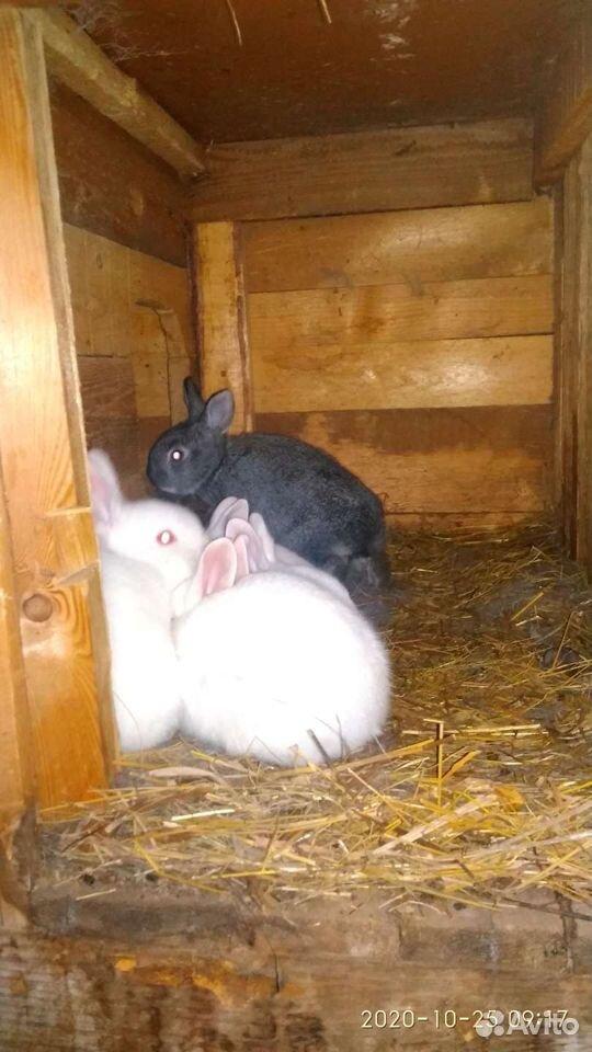 Кролик  89835018830 купить 1