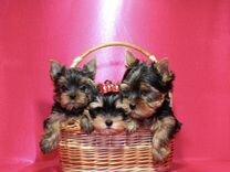 Крошки — Собаки в Геленджике