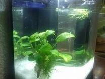 Пластиковый аквариумный комплекс с оборудованием